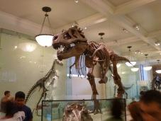 museo-storia-naturale-new-york_yasut.T0